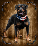 Patriotic To The Bone Rottweiler